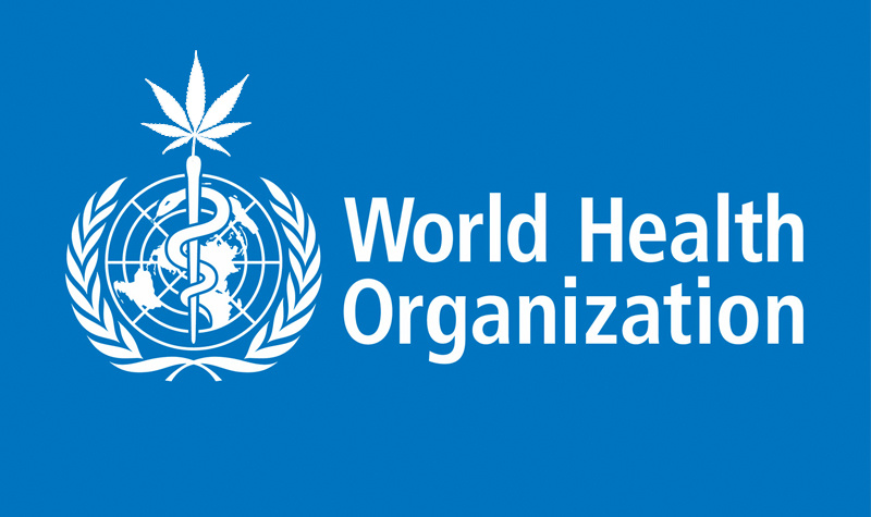 UN Takes Steps to Reschedule Cannabis Internationally