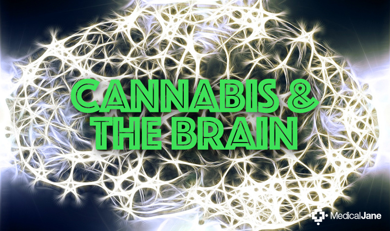 Brain Study Explores Effects of Combined Use of Cannabis ...