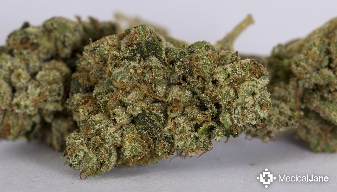 master yoda marijuana strain review