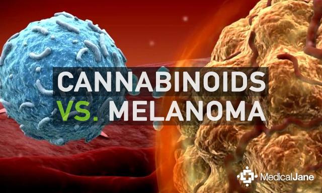 Essay: The Use of Marijuana for Medicinal Purposes