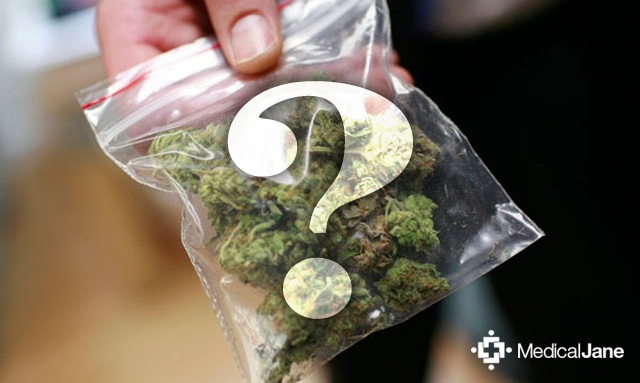 the unsuccessful quest to legalize marijuana use The florida senate home daily to crackdown on states that have legalized the use of marijuana for medical and and our quest for.