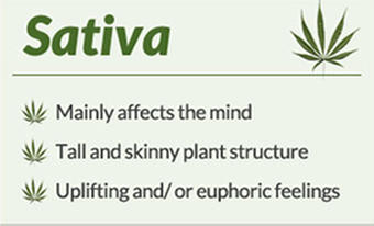 sativaARTICLE
