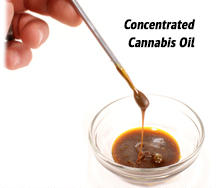 Concentrated Cannabis Oil