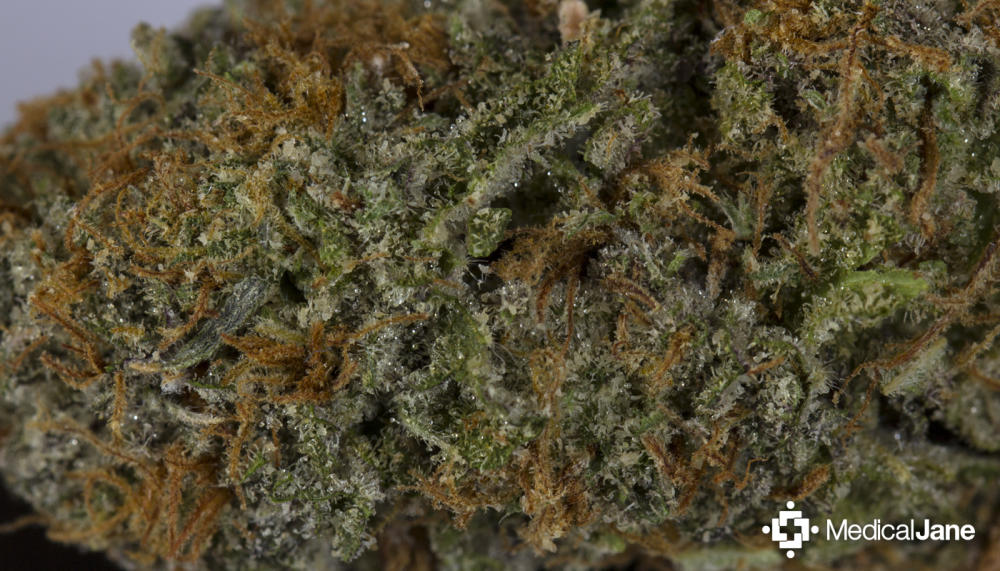 Ken's Grand Daddy Purple (GDP): A Strong Sleep-Aid