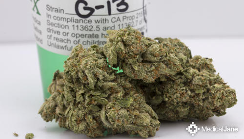 G-13 Marijuana Strain (Review)