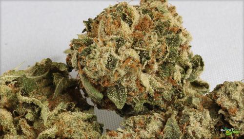 OG Kush Marijuana Strain (Review)