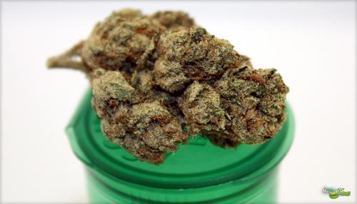 Леденец со вкусом марихуаны выращивал в лесу коноплю