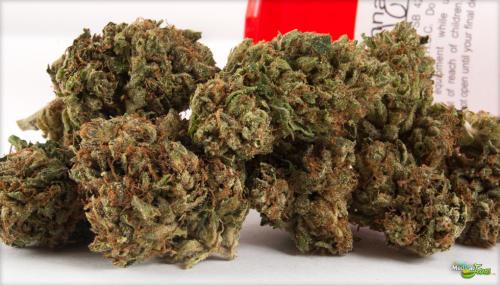 Diablo OG Marijuana Strain (Review)