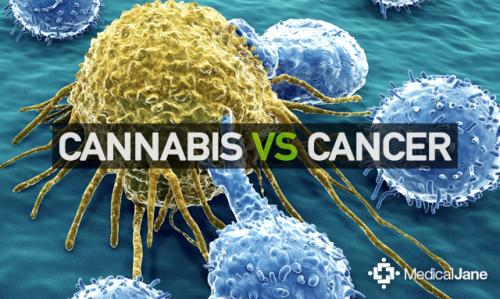Studies Show Cannabis Targeting, Killing Cancer Cells