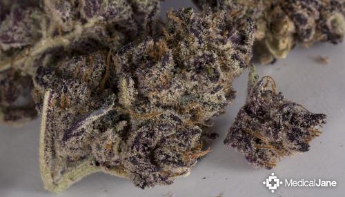 Pink Candy Marijuana Strain (Review)