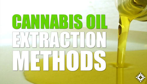 Study: What Is The Best Cannabis Oil Extraction Method?