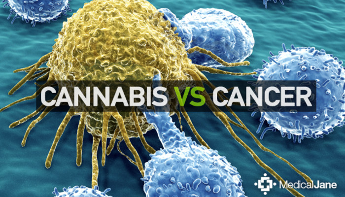 Image result for cannabinoids and cancer