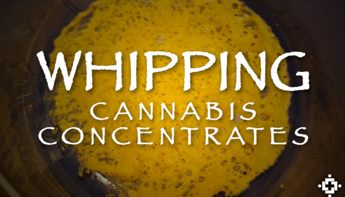 Cannabis Concentrates Trial: The Effects Of Whipping