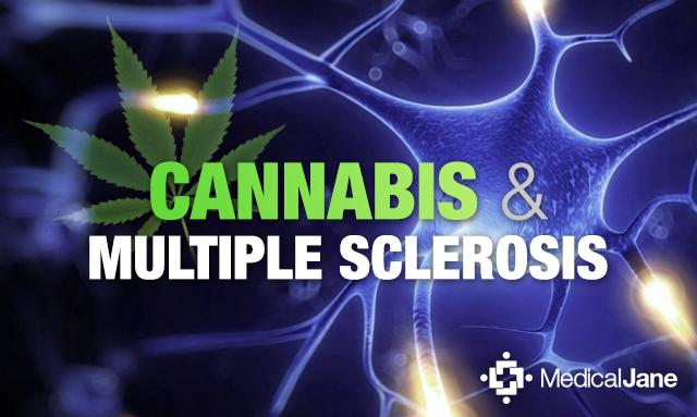 cannabis may decrease pain from multiple sclerosis