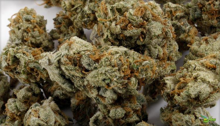 Amnesia Haze Marijuana Strain (Review)