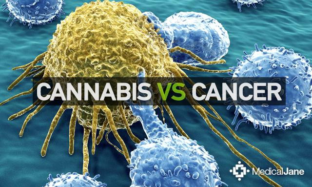 Image result for cannabis vs cancer