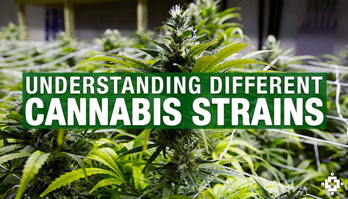 Different weed strains