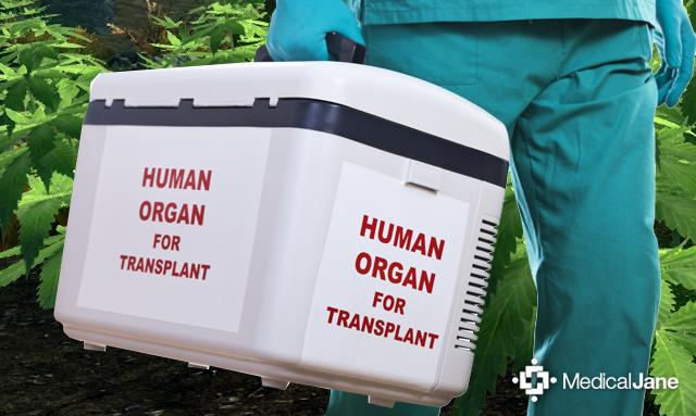 Study: THC Helps Prevent Organ Transplant Rejection